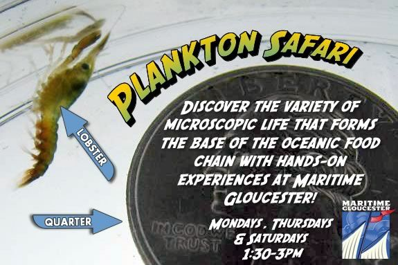 Join the team at Maritime Gloucester for a Plankton Safari every Saturday and Sunday