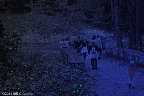 Come Explore Maudslay State Park on a Firefly Expedition!