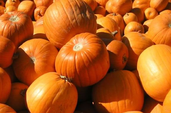 Come paint pumpkins at the Marblehead Community Center