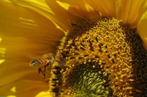 Bees are in trouble, and humans can help! Find out more at Moraine Farm.