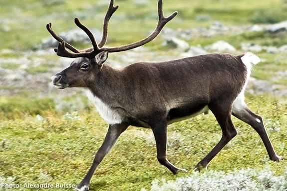 Kids will learn about reindeer at Mass Audubon's Joppa Flats Education Center in
