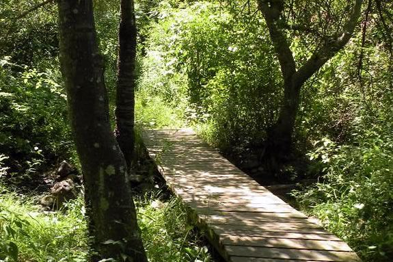 Join Swampscott Conservancy on a Saturday morning hike in the Salem Woods!
