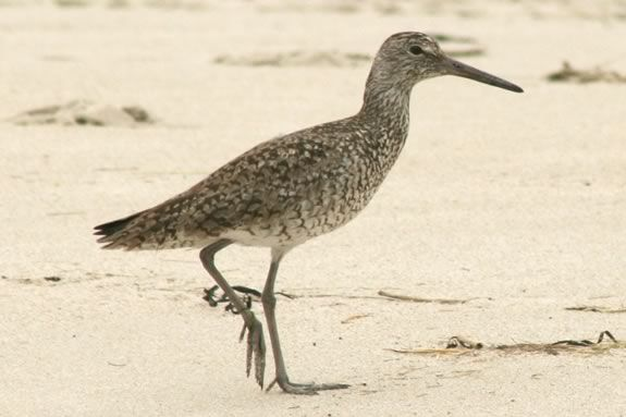 Come meet a sanpiper and learn about shore birds at Parker River Wildlife Refuge!