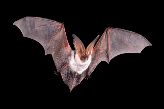 Sawyer Free Library, Gloucester MA Bats: The Real Truth Behind a Halloween Icon