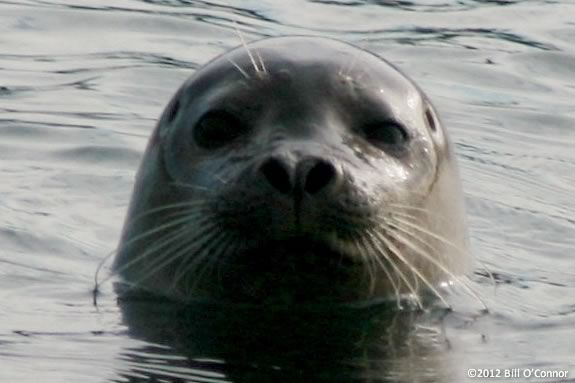 Seals live all over the coast of the North Shore. Kids will learn more at Joppa!