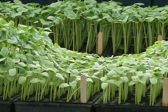 Long Hill needs children to help plant seedlings for the 2011 children's garden!