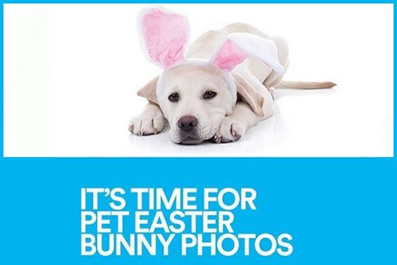 Pet Photos with the Easter Bunny at Northshore Mall, Peabody MA