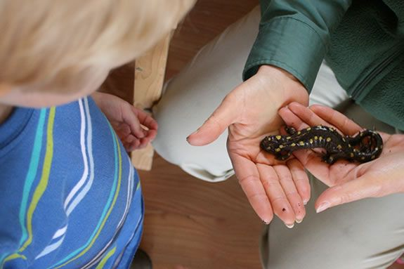 Learn about spotted salamanders and vernal creatures from the Cape Ann Vernal Po