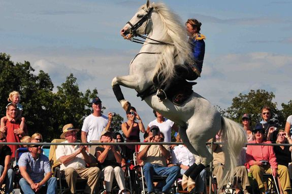 Herrmanns' Royal Lipizzan Stallions come to Cogswell's Grant in Essex