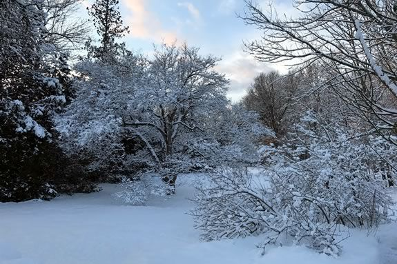 Come enjoy the Winter landscapes of the Stevens-Coolidge Estate in North Andover