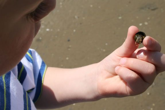 Beach seining is a scientific tool used by marine biologists and scientists.