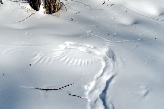 Kids will learn about tracks and signs at Ipswich River Wildlife Sanctuary in Topsfield during the Holiday Vacation Week!