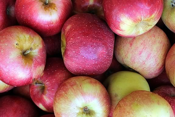 Pick your own apple orchards and places to buy fresh local apples on Massachusetts' North Shore