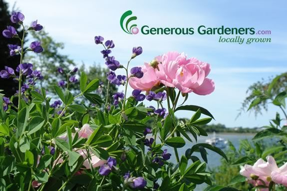 Generous Gardeners needs your help to raise funds for the G.E.F.!