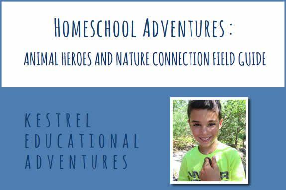 Homeschool Adventures Kestrel Educational Adventures