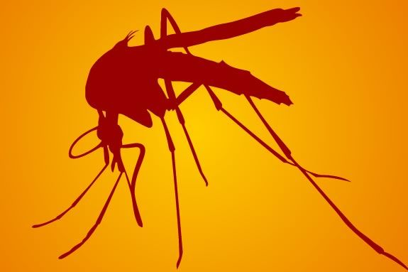 West Nile Virus hasd been found on Massachusetts' North Shore
