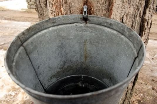 Rent a bucket to harvest Maple Sap and convert it to Maple Syrup at IRWS!
