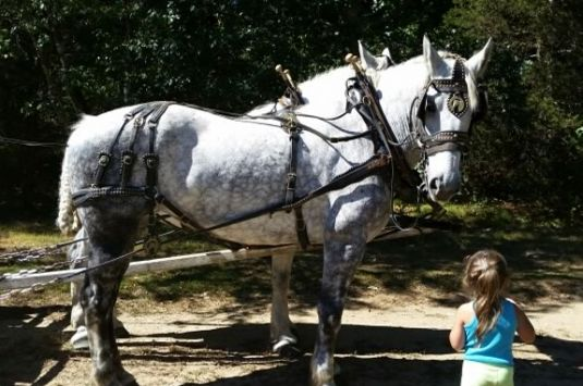 Come Explore Maudslay State Park on a FREE hayride!