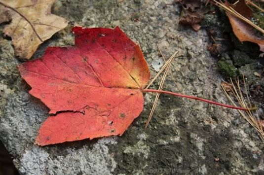 Come join the fun with the Trustees on a leaf hunt at the Stevens Coolidge Place in North Andover! Photo: Bill O'Connor