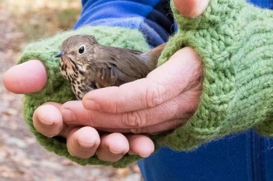 What birds come to your yard in the winter? Find out at Joppa Flats Education Center!
