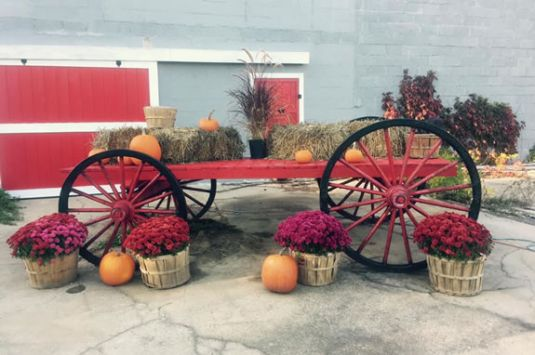 Long Hill Orchard Fall Festival