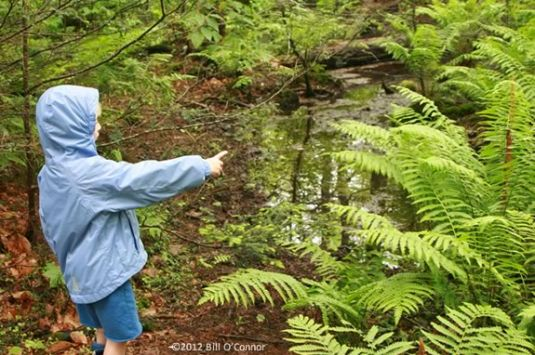Join this Trails and Sails Hike through the woods in Ipswich for a Ice Cream Treat!